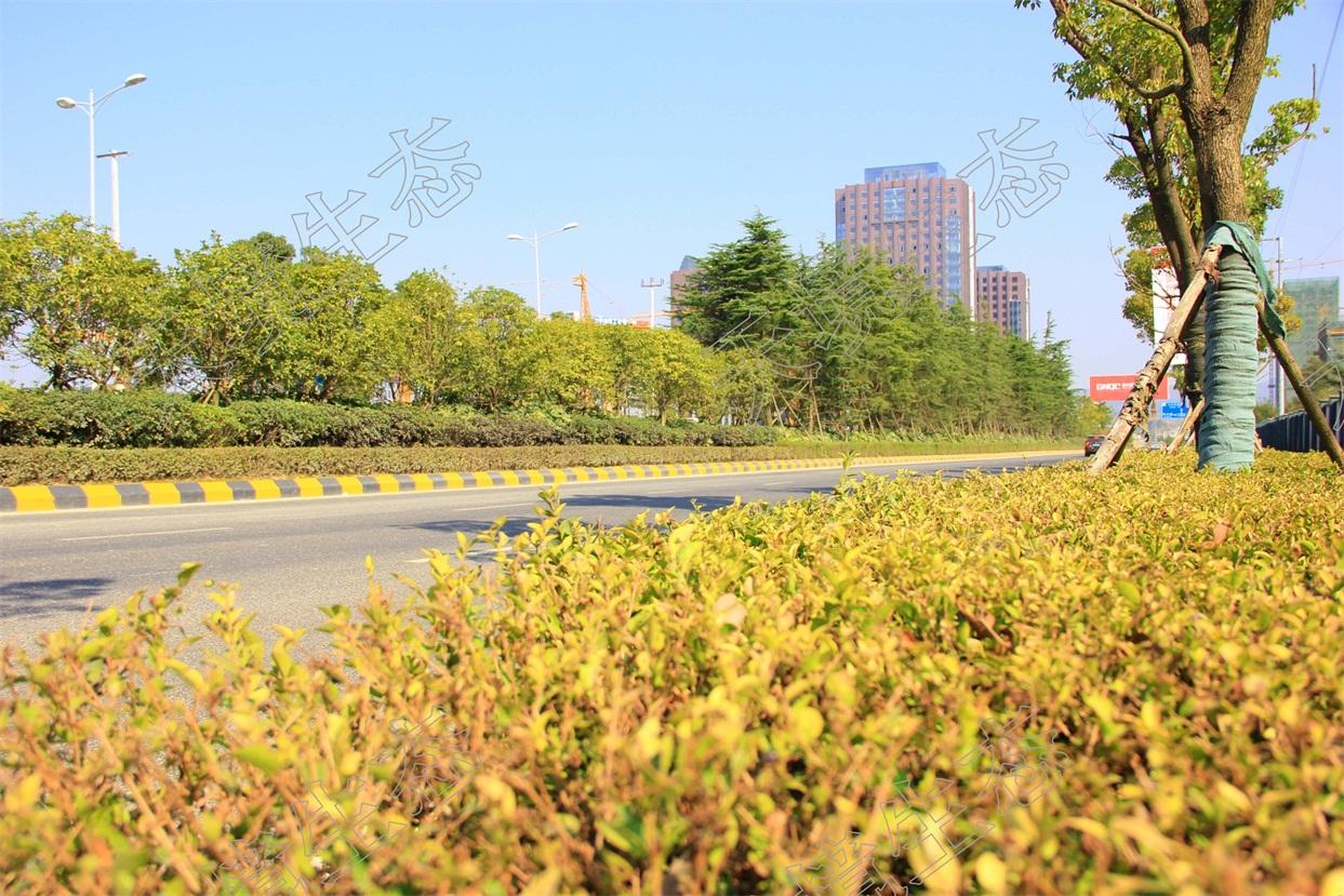 贵阳高新区道路绿化